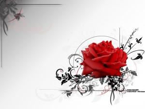 Postal: Rosa roja