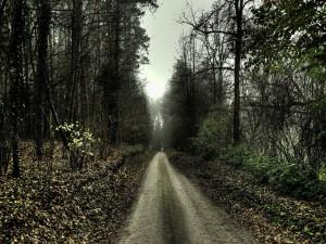 Postal: Un camino solitario