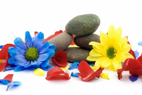 Flores y piedras