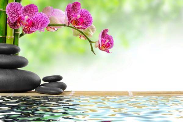 Orquídea, bambú, piedras y agua