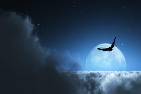 Pájaro sobre las nubes con la luna de fondo