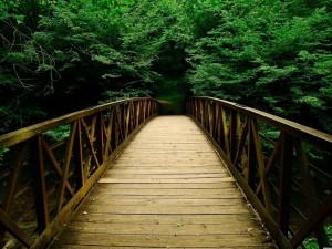Postal: La entrada al bosque