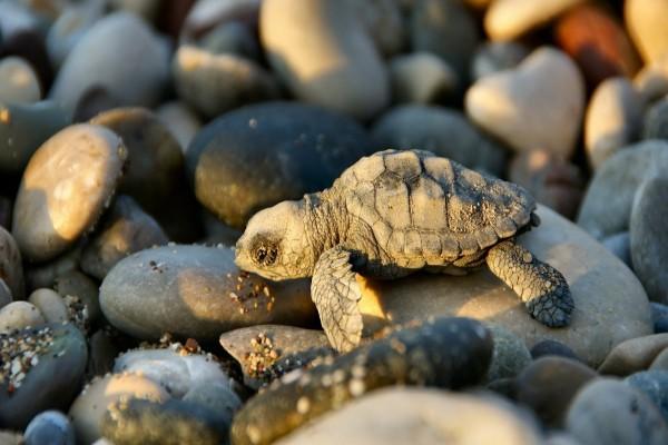 Pequeña tortuga sobre piedras