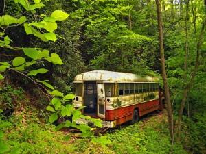 Autobús abandonado en medio del bosque