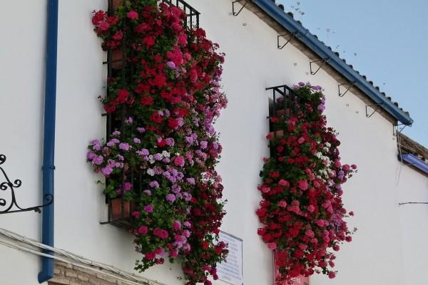 Flores cayendo desde las ventanas