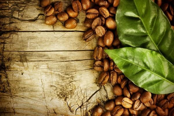 Hojas verdes y granos de café