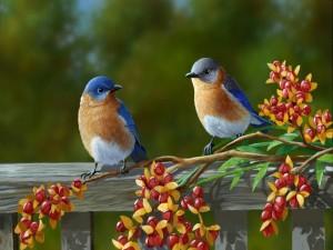 Un par de pájaros de colores