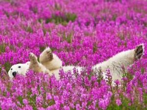 Postal: Un oso feliz