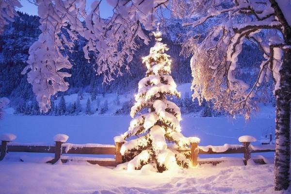 Un árbol nevado