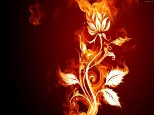 Postal: Flor de fuego