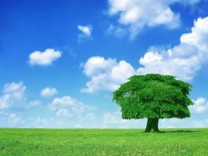 Postal: Árbol solitario en una pradera verde