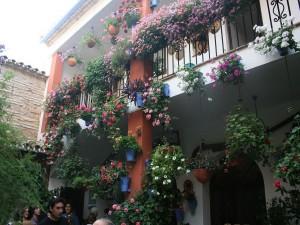 Macetas de flores en la pared (Festival de los Patios)