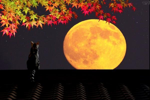 Gato en un tejado mirando la luna llena