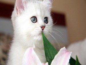 Postal: Gato blanco