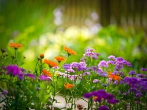 Abejas en flores moradas y naranjas