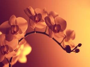 Postal: Rama de orquídea