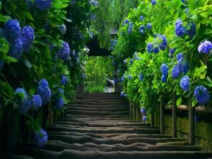 Postal: Puente cubierto de hortensias