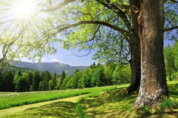 La luz del sol filtrándose por las ramas de un gran árbol