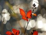 Rama con hojas rojas