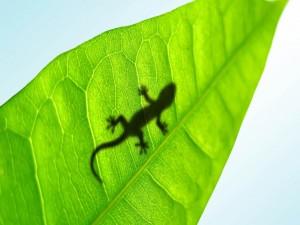 Sombra de salamandra en una hoja