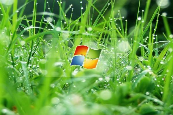 Windows en la hierba