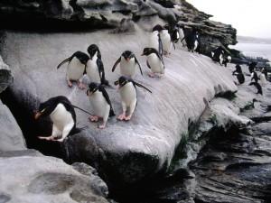 Postal: Grupo de pingüinos