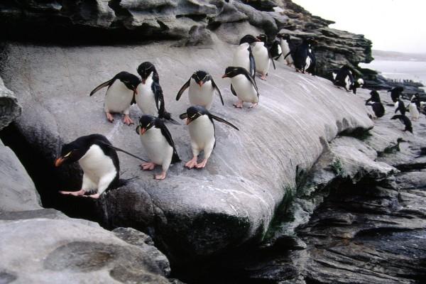 Grupo de pingüinos