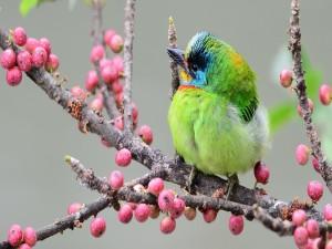 Postal: Pájaro sobre una rama de bayas
