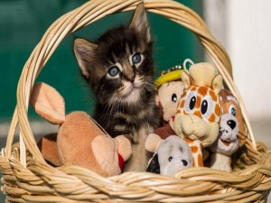 Gatito en una cesta con sus juguetes