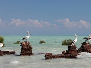 Postal: Pelícanos sobre las rocas
