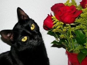 Postal: Gato oliendo unas rosas