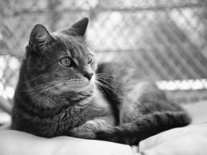 Gato en blanco y negro