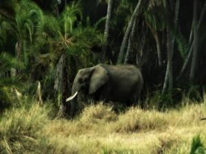 Elefante en la jungla