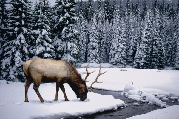 Reno en la nieve