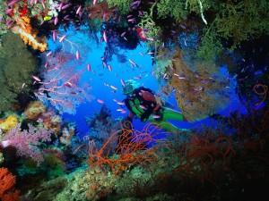 La riqueza del fondo marino