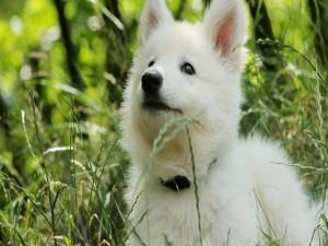 Cachorro de perro blanco