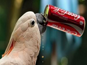 Un lorito tomando Coca-Cola