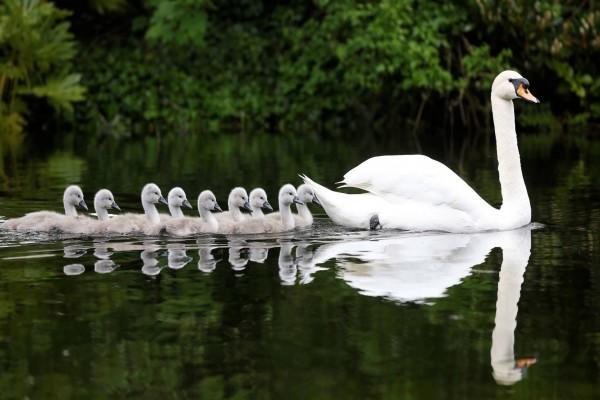 En fila seguimos a mamá