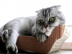 Un gatito descansando