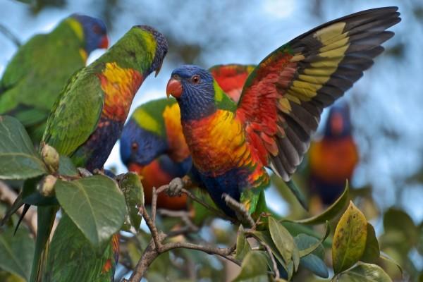 Loritos multicolores en una rama