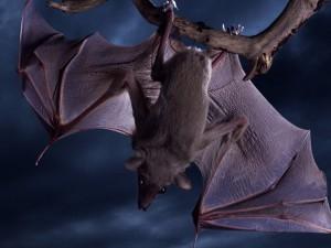 Murciélago colgado de una rama