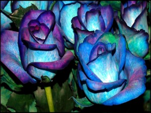 Postal: Rosas tintadas de azul