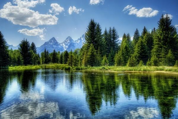 Verdes pinos a la orilla del lago