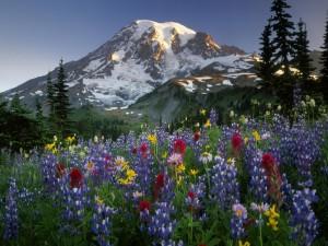 Flores silvestres en la falda de la montaña