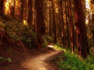 Un camino del bosque