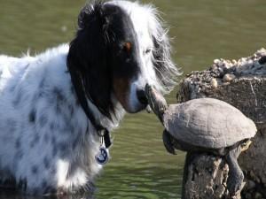 Perro y tortuga amigos