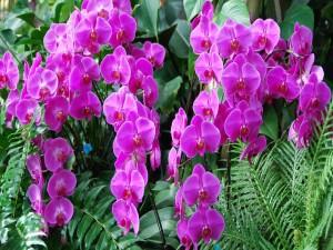 Orquídeas color lila