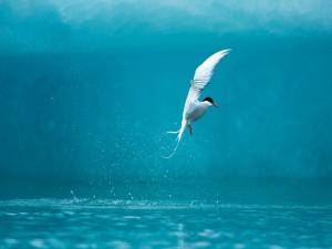 Ave sobre el agua