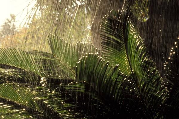 Lluvia sobre unas plantas verdes