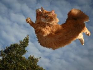 Postal: Gran salto gatuno